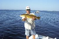 Nice 8 lb. redfish caught in Charlotte Harbor