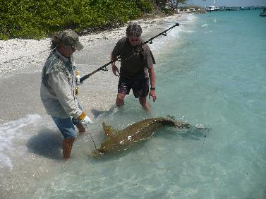 Pin World Record Goliath Grouper on Pinterest